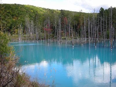 本日の青い池