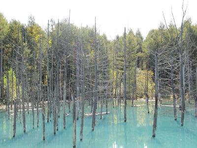 台風後の青い池。