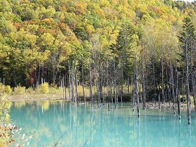 青い池周辺の紅葉。。。