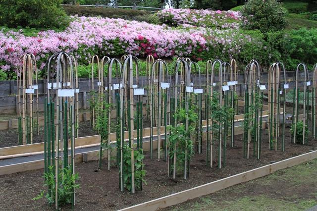 竹間園芸花壇