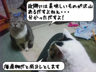 せんじゅう10