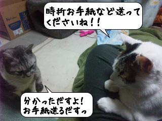 せんじゅう8