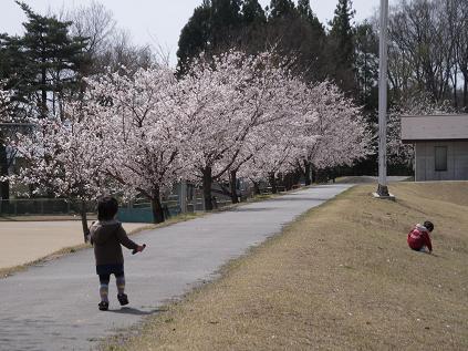 お花見散歩 その1