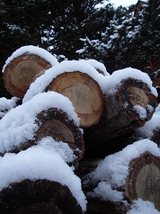 初積雪(2011年12月)