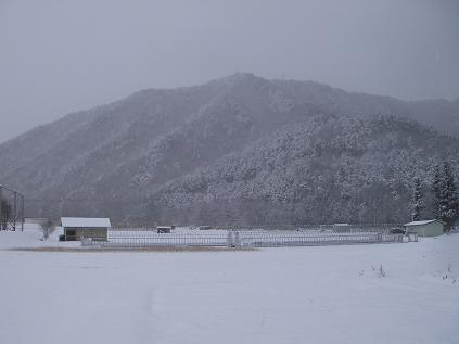 裏山(2011年12月)