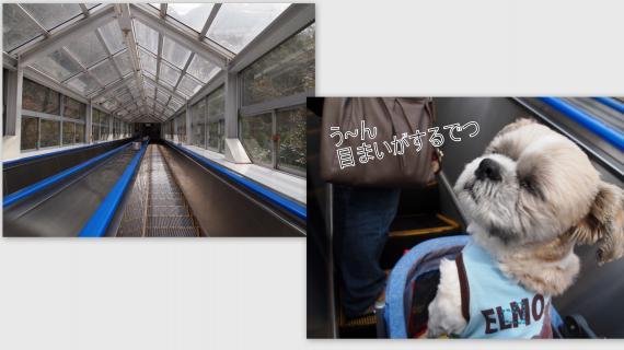 2011-02-0611_convert_20110310001106.jpg