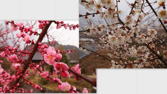 2011-03-141_convert_20110317150021.jpg