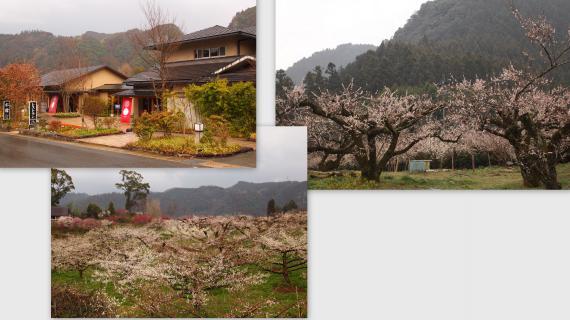 2011-03-14_convert_20110317151700.jpg