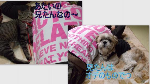 2011-03-241_convert_20110324232812.jpg