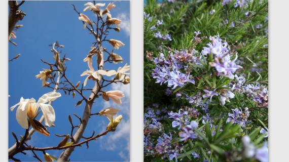 2011-03-251_convert_20110326024027.jpg