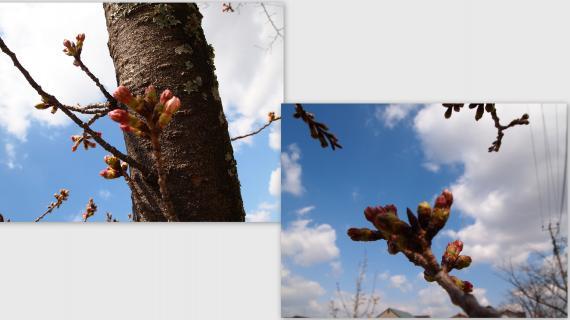 2011-03-25_convert_20110326024003.jpg