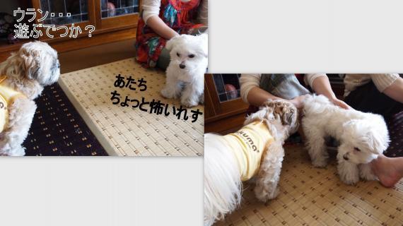 2011-03-263_convert_20110329020715.jpg