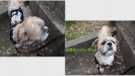 2011-04-112_convert_20110419182822.jpg