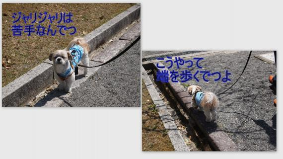 2011-04-1210_convert_20110424222923.jpg