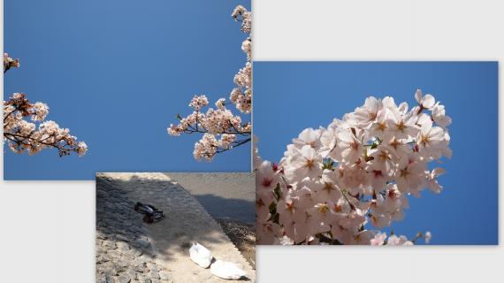 2011-04-124_convert_20110422212506.jpg