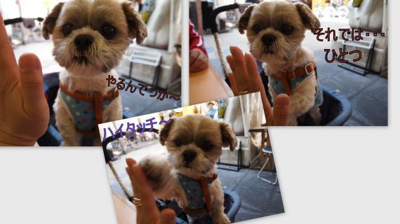 2011-04-1318_convert_20110503143222.jpg
