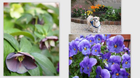 2011-04-281_convert_20110501235907.jpg