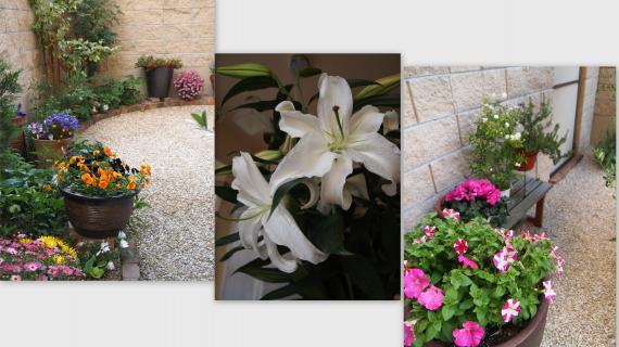 2011-04-28_convert_20110501235933.jpg