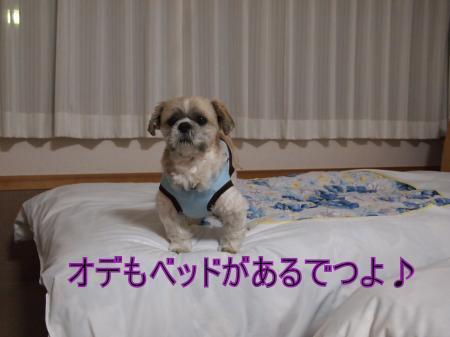 ・搾シ姫2051346_convert_20110304012443