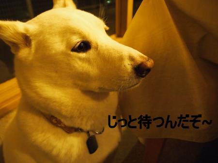 ・搾シ鳳2051335_convert_20110304012528