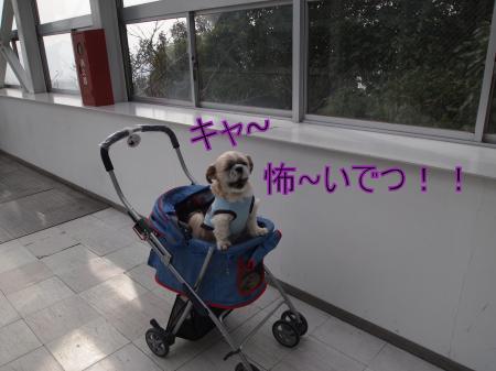 ・搾シ姫2061447_convert_20110310001510