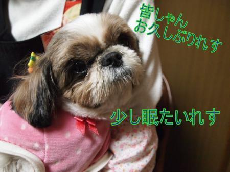 ・搾シ姫3132215_convert_20110317020619