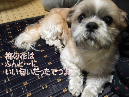 ・搾シ姫3112212_convert_20110317152524