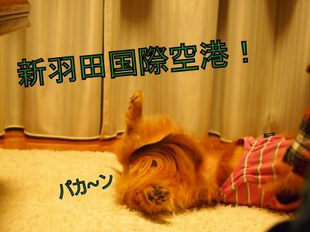 ・搾シ善3172270_convert_20110323012013