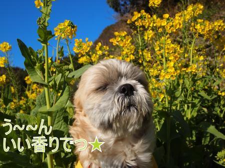 ・搾シ姫3102164_convert_20110323131709