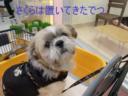 ・搾シ疋SCF8073_convert_20110324232908