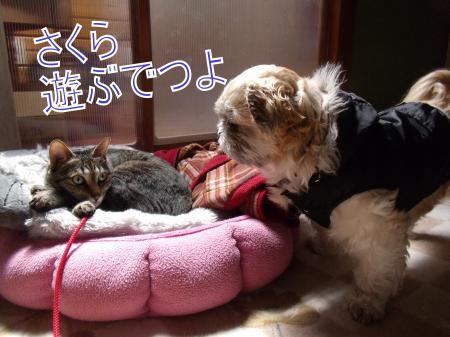 ・搾シ魯SCF8060_convert_20110324232929