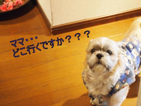 ・搾シ儕3222298_convert_20110325015533