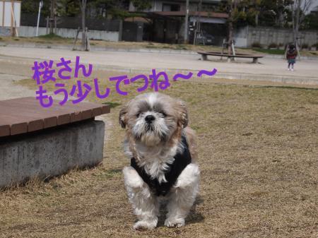 ・搾シ姫3252311_convert_20110326024101