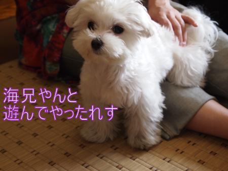・搾シ捻3262342_convert_20110329020825