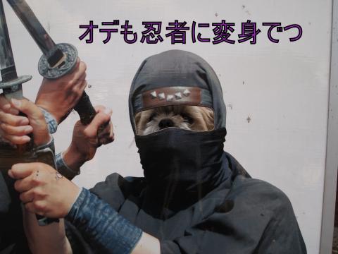・搾シ猶3282418_convert_20110401014911