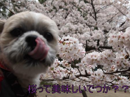 ・搾シ姫4032567_convert_20110405133700
