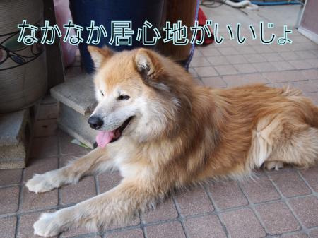 ・搾シ捻4062637_convert_20110407013958