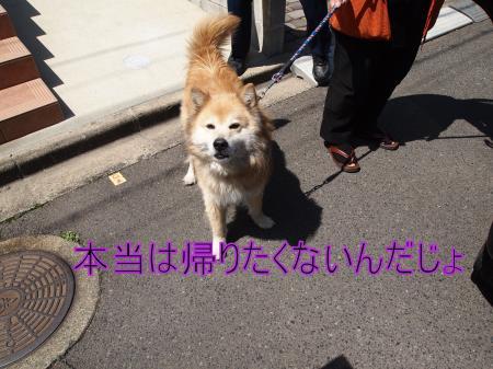 ・搾シ鳳4062652_convert_20110407014043