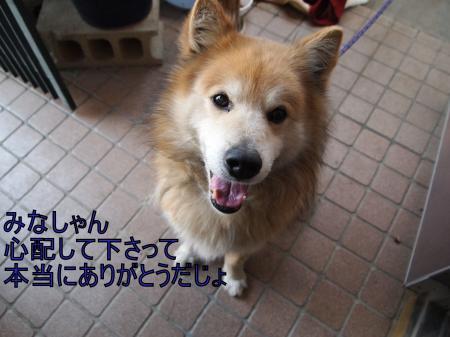 ・搾シ儕4062634_convert_20110407014125