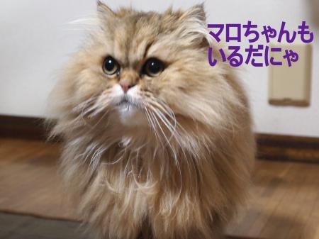 ・搾シ捻4082660_convert_20110410032904