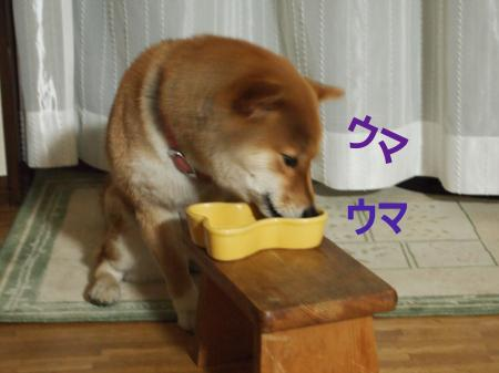 ・搾シ姫4082708_convert_20110410032938