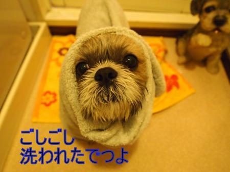 ・搾シ姫4223497_convert_20110423021020