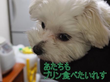 ・搾シ捻4233508_convert_20110429190530