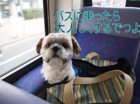 ・搾シ姫4283536_convert_20110430215431