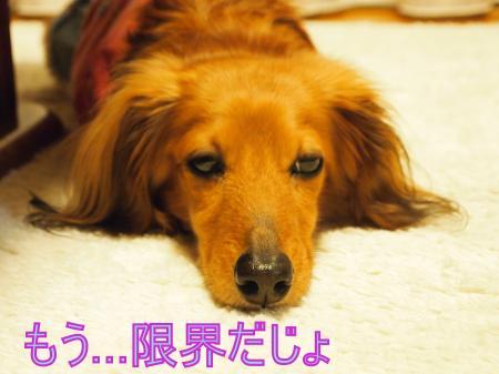 ・搾シ娠4283553_convert_20110502000100