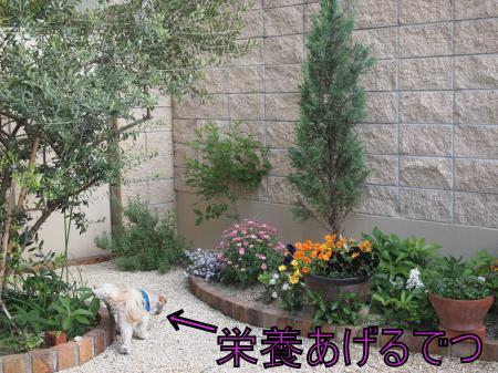 ・搾シ単4283546_convert_20110502000215