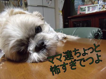 ・搾シ疋SCF8056_convert_20110510010022