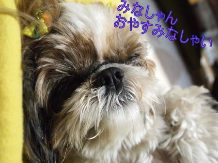 ・搾シ姫5083800_convert_20110512201901