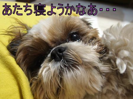 ・搾シ鳳5083803_convert_20110512201922