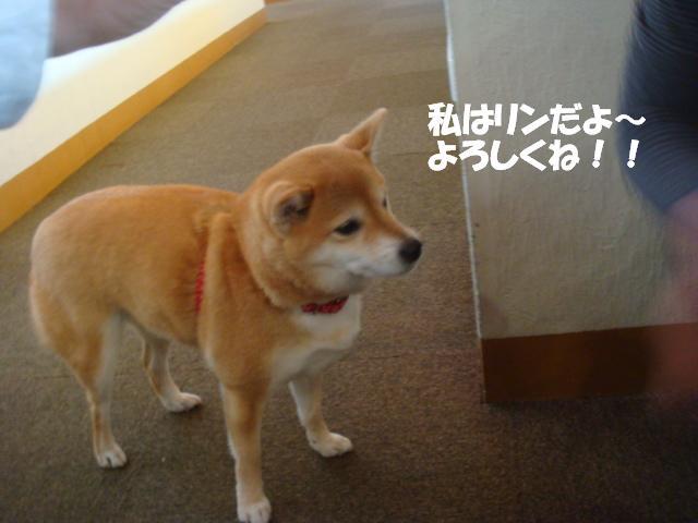DSC07295ー編集